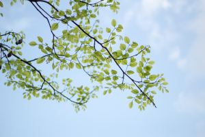 branches with leaves against blue sky