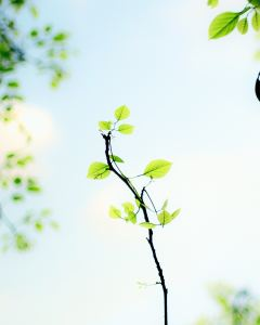 small branches and leaves, bright blue sky