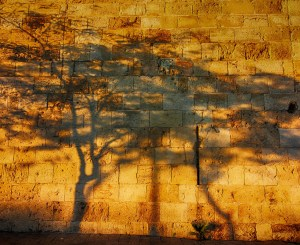 shadows of trees on stone wall