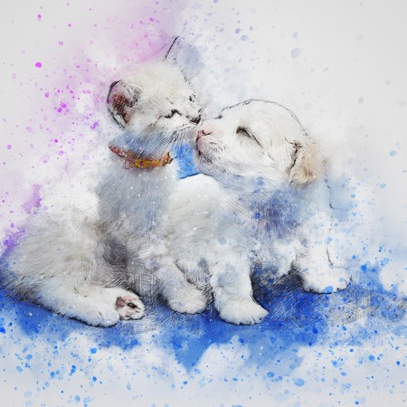 white kitten and white puppy sniffing each other's noses