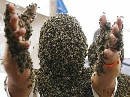 800,000 Bees swarmed and killed an Arizona landscaper yesterday. This image is not from the incident.