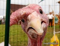 Turkey1 - Turkey