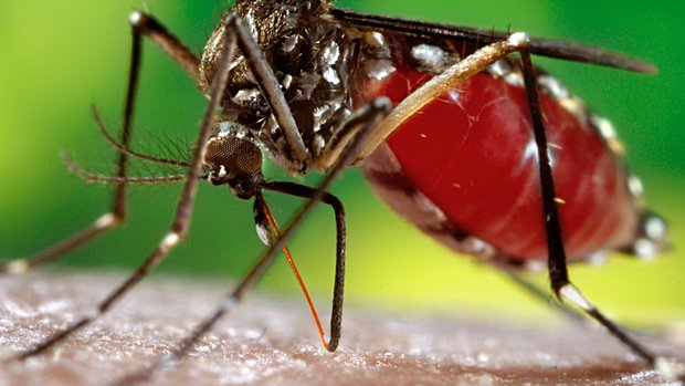 Mosquitoes: An Annapolis Urgent Care Spotlight