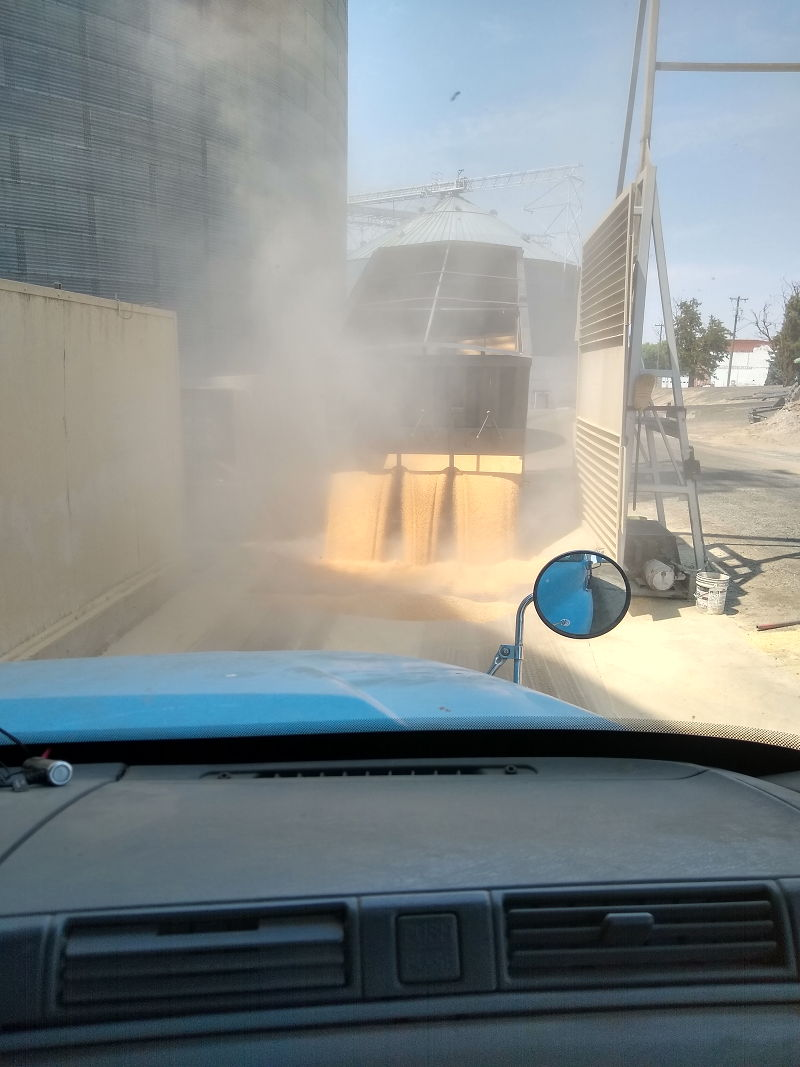 Truck unloading wheat at the elevator during a seasonal job while traveling full time in an RV.