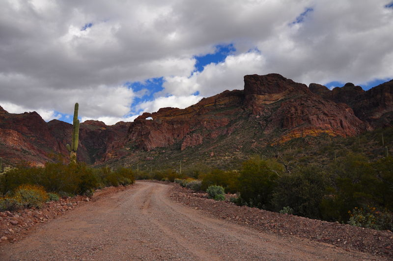 Taking the scenic drive through Organ Pipe National Monument while boocking in Gunsight wash.