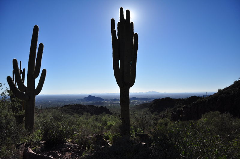 Large saguaro cactus with sun behind it while hiking near the Superstition mountains in Arizona.