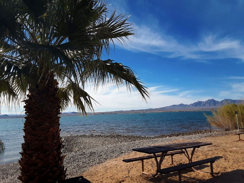 View of Lake Havasu with a palm tree and picnic table on the edge of the lake as we live full time in our RV around the country.