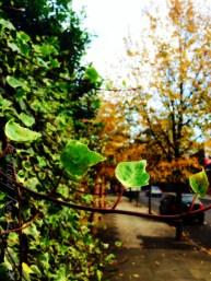 Autumn_leaves copy