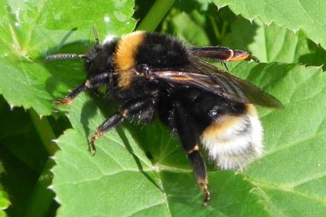 bee01 - Wasps