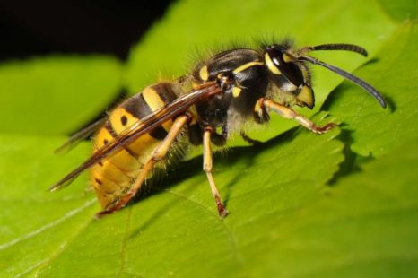 wasp03 - Wasps