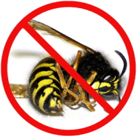 wasp - Evo Wasp Can Treat Wasps in Your Area