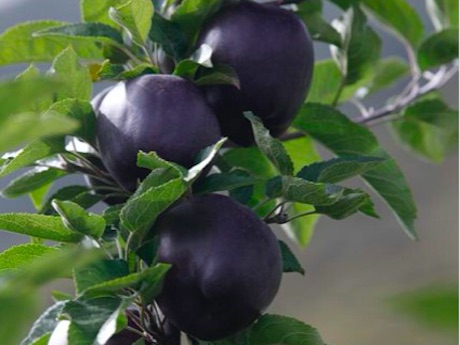 Black diamond apples