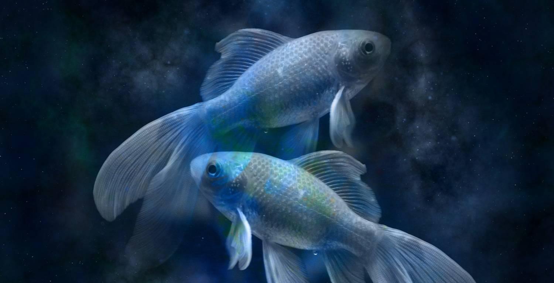 Преимущество Рыб перед другими знаками зодиака
