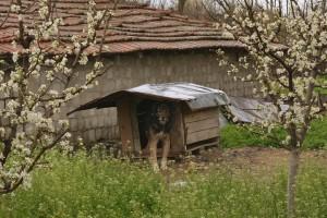 Пролет в Бели брег. Фото: Р.Йорданов/Евромегдан