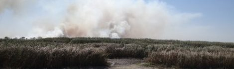 Пожар в Бейсугските блата.
