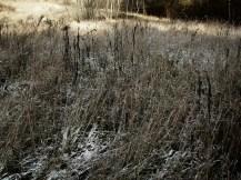 zim0.3.5