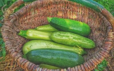 Cukinia – jedno z najzdrowszych warzyw