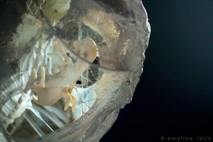 Meduza | Medusa