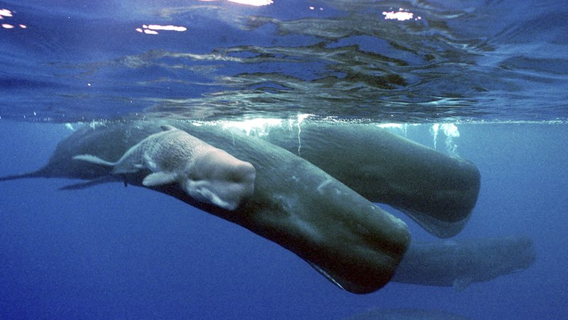 Spain creates Mediterranean Sea reserve for whale migration
