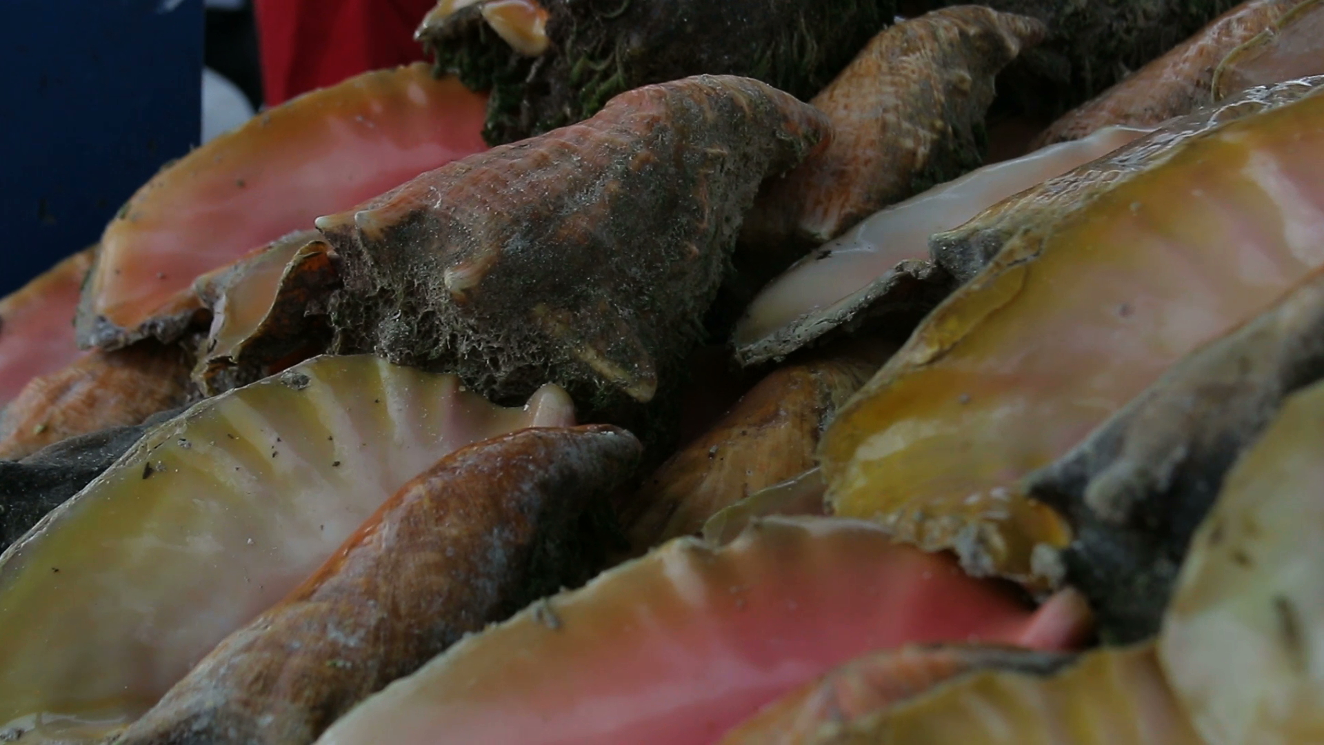 Conch poisoning cases increase