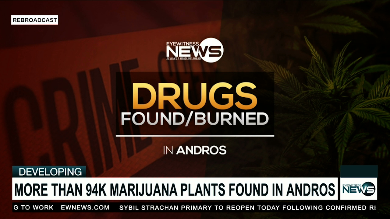 More than 94 thousand marijuana plants discovered in Andros destroyed