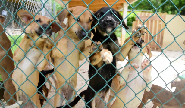 Bahamas HumanE Society struggling with overcrowding