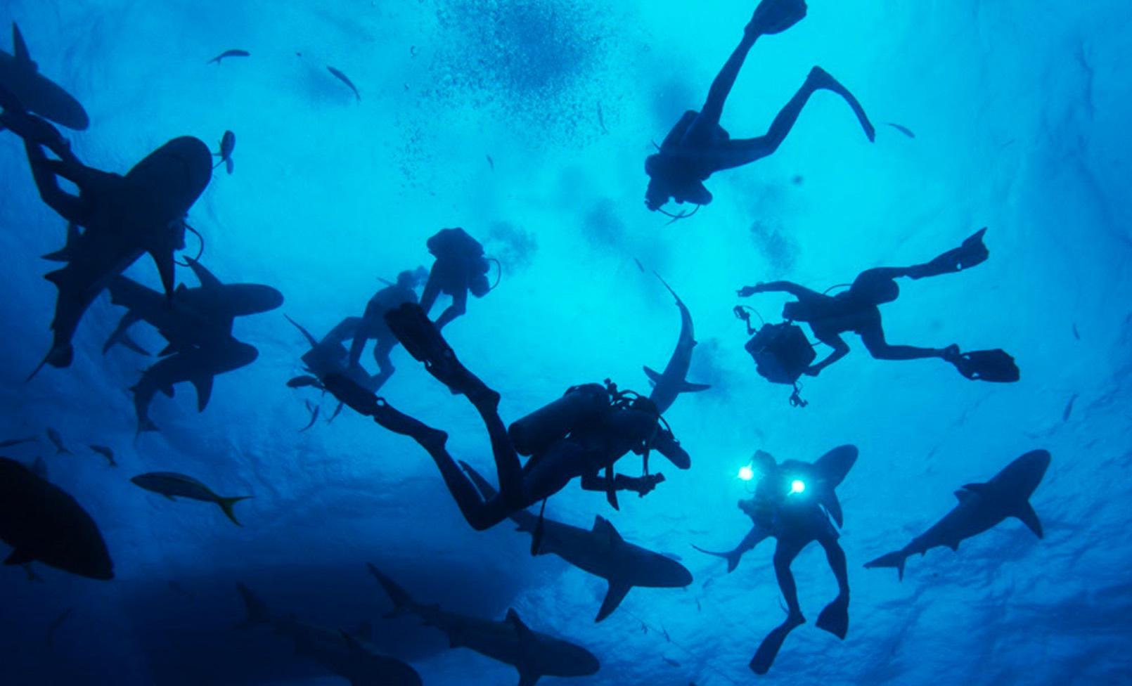 Cousteau Wonders Sea 3D Monk review movie