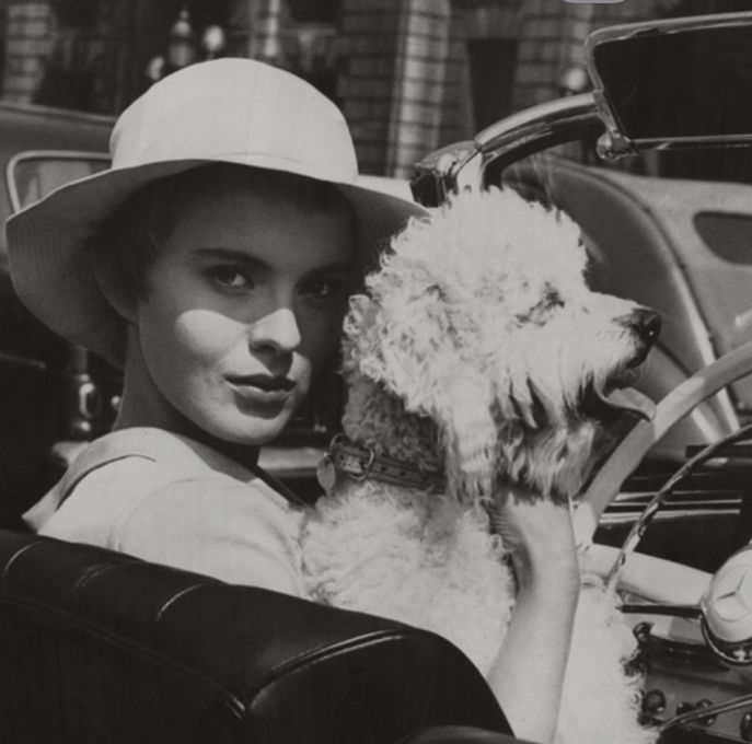 Jean Seberg dog pet