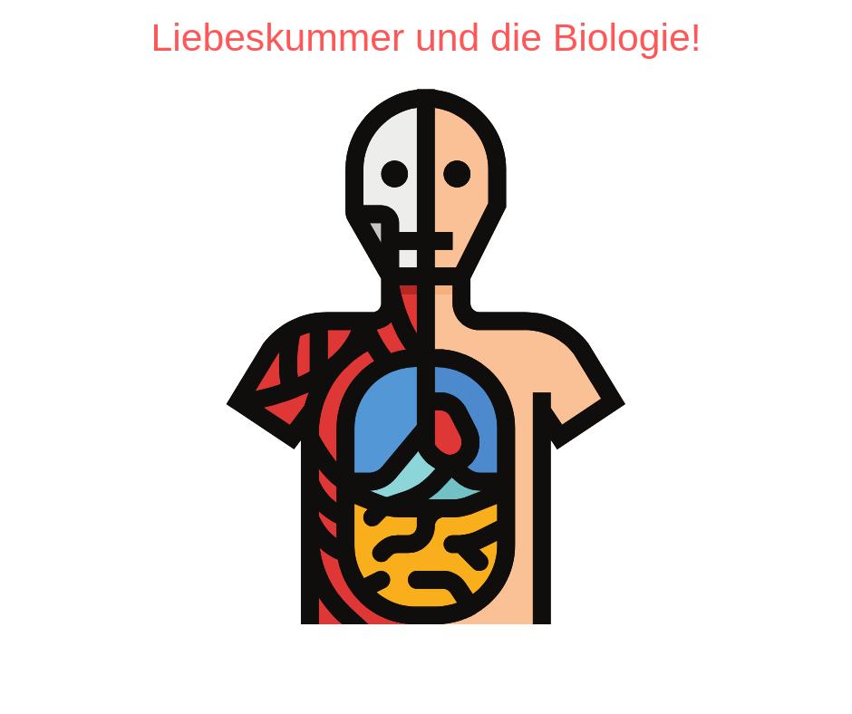 liebeskummer biologisch