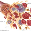 Blood and blood cells