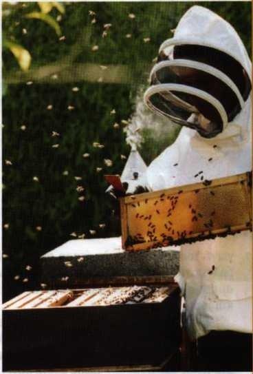Πώς να γίνετε μελισσοκόμος σε 10 βήματα