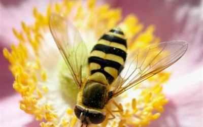 Κυψέλη – το σπίτι της μέλισσας