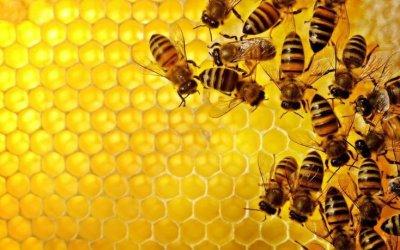Τα Α …. Β της μελισσοκομίας και πρόγραμμα νέων αγροτών