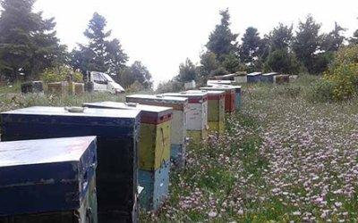 Συνενώσεις μελισσιών, με ποιους τρόπους μπορεί να γίνουν;