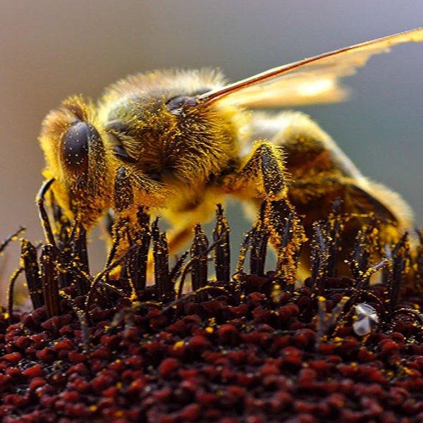 Αυστραλία | Μέλισσες που θεραπεύουν…