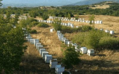 Οκτώβριος, μελισσοκομικές ενέργειες για τη σωστή προετοιμασία των μελισσιών.