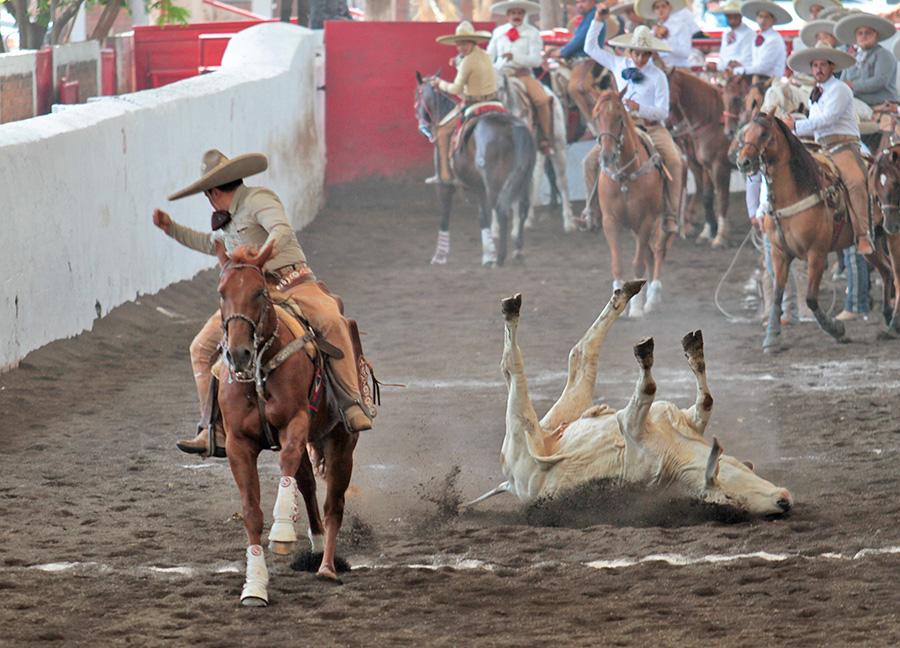 Rodrigo Vera abanicando con fuerza este toro durante el coleadero, para Tres Ases