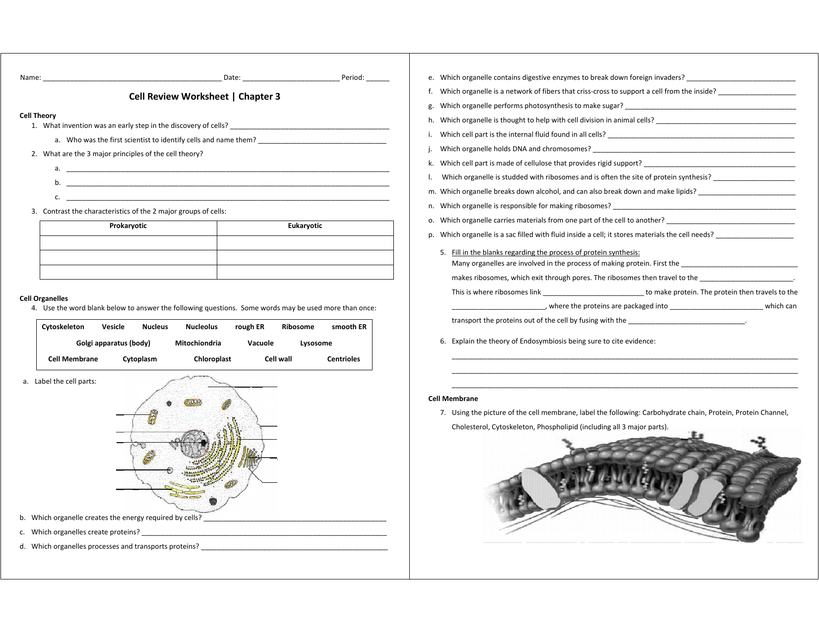 Cell Review Worksheet
