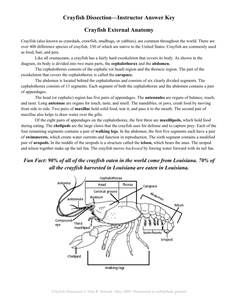 Crayfish Dissection Worksheet Answers