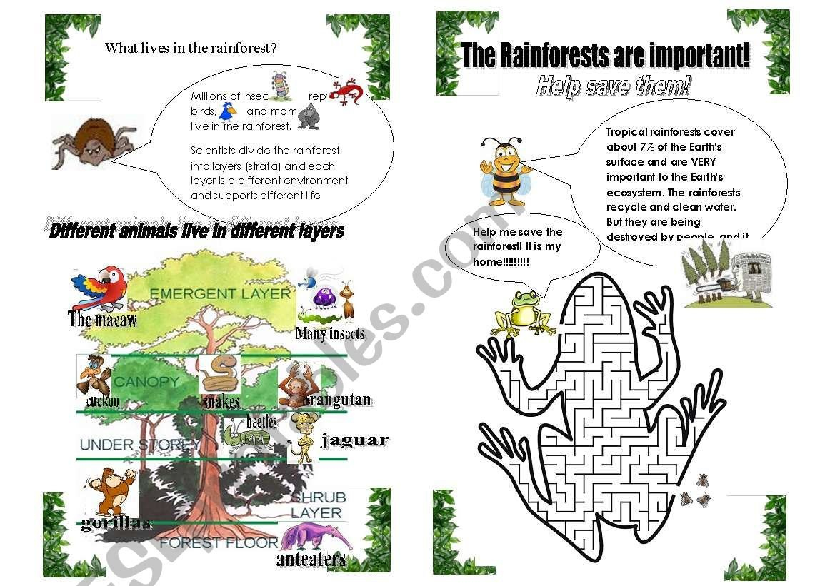 Layers Of The Rainforest Worksheet