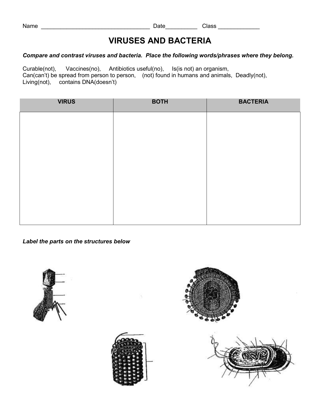 Virus And Bacteria Worksheet Key