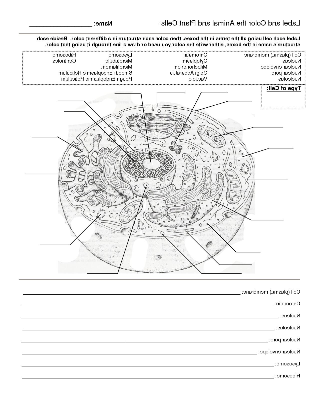 Animal Cell Worksheet Labeling