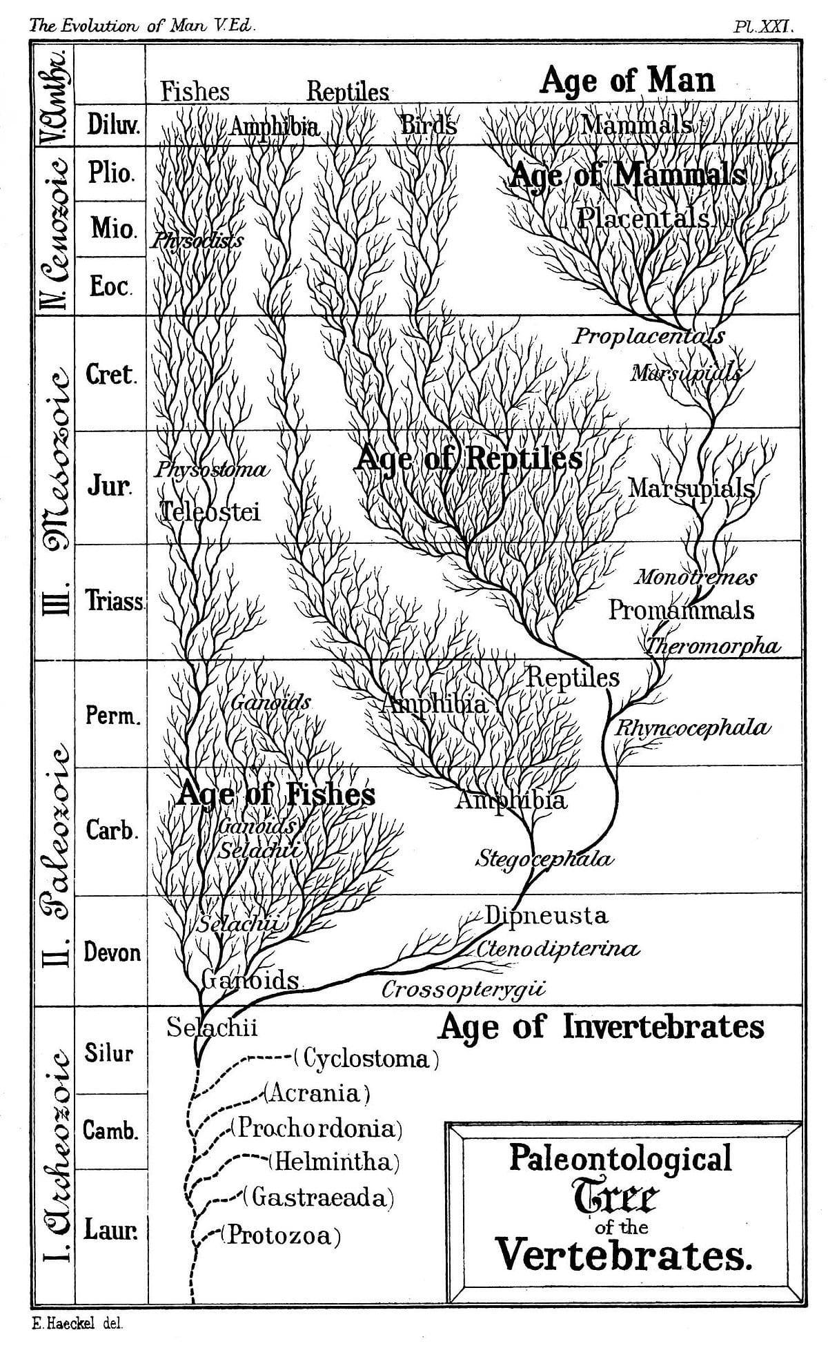 Evidence Of Evolution Worksheet Answers