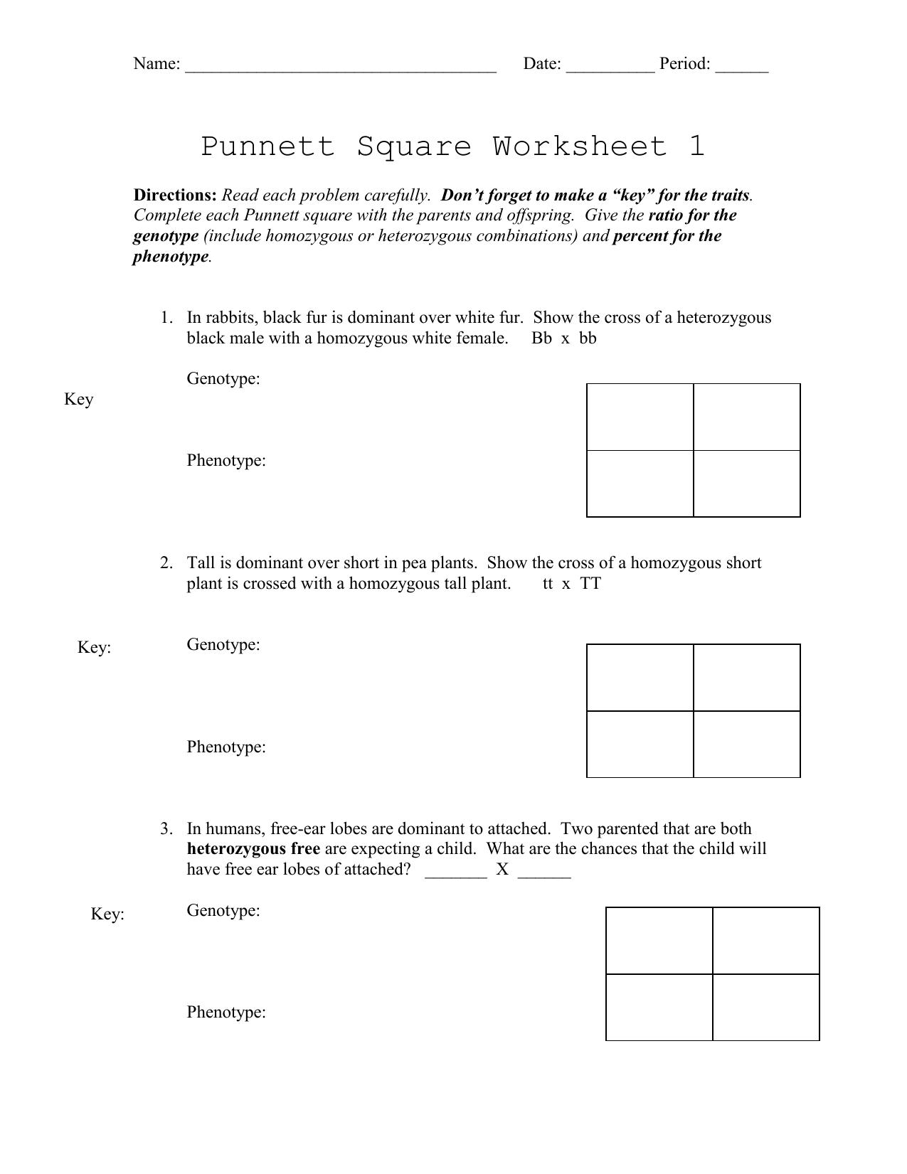 Punnett Square Worksheet 1 Key