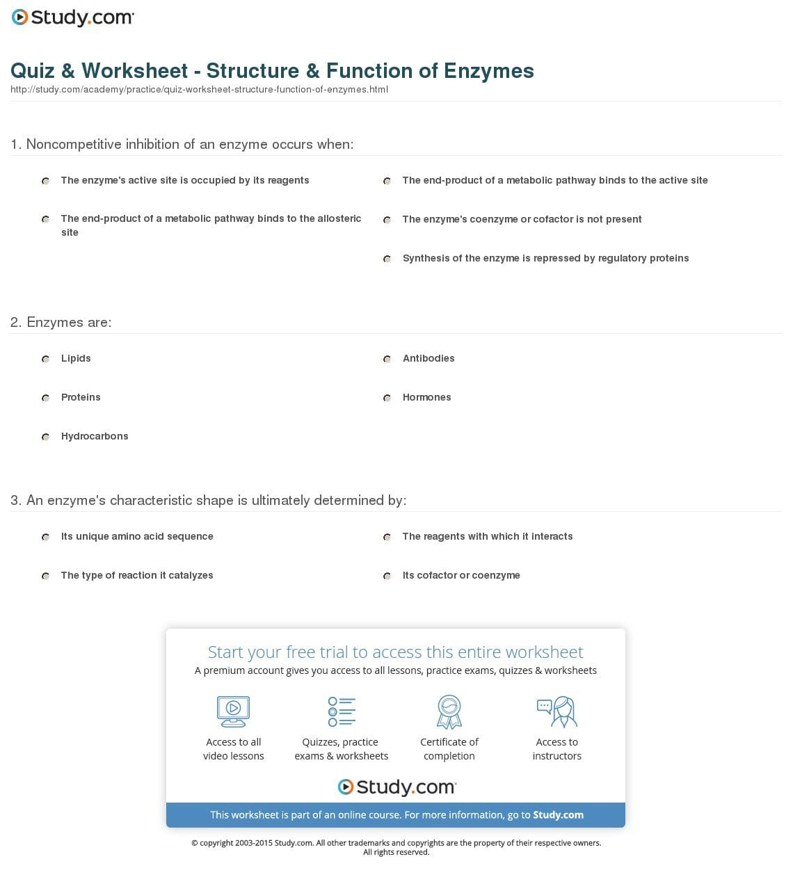 Enzymes And Their Functions Worksheet Answers