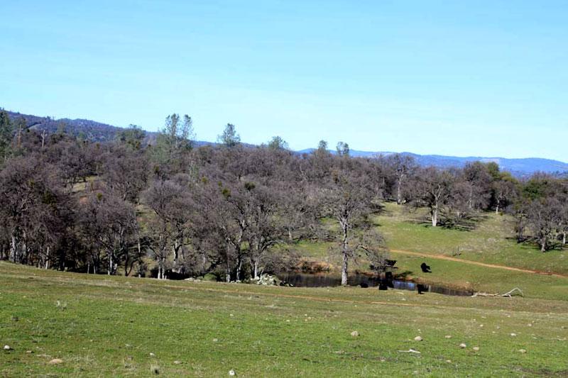 ranch9 (2)