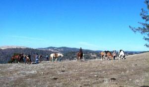 EquiTrek-horsesOnRidge