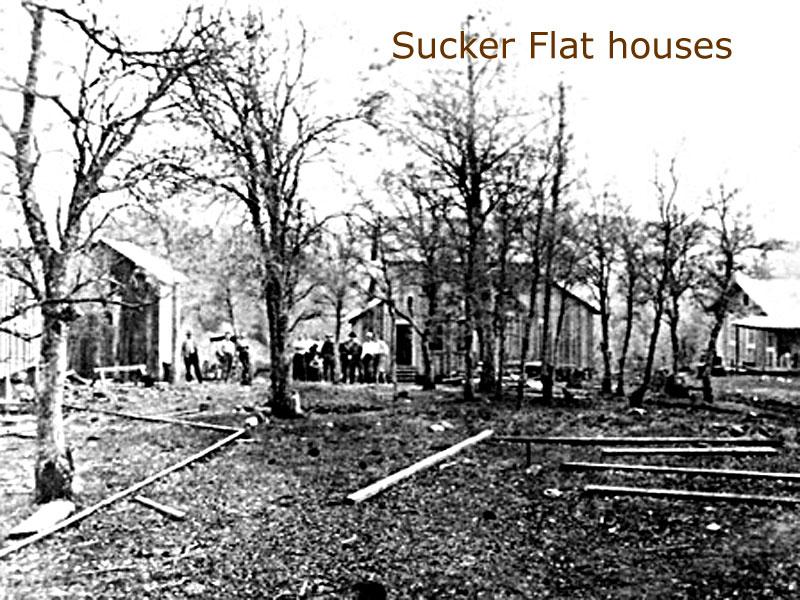 SuckerFlat (2)