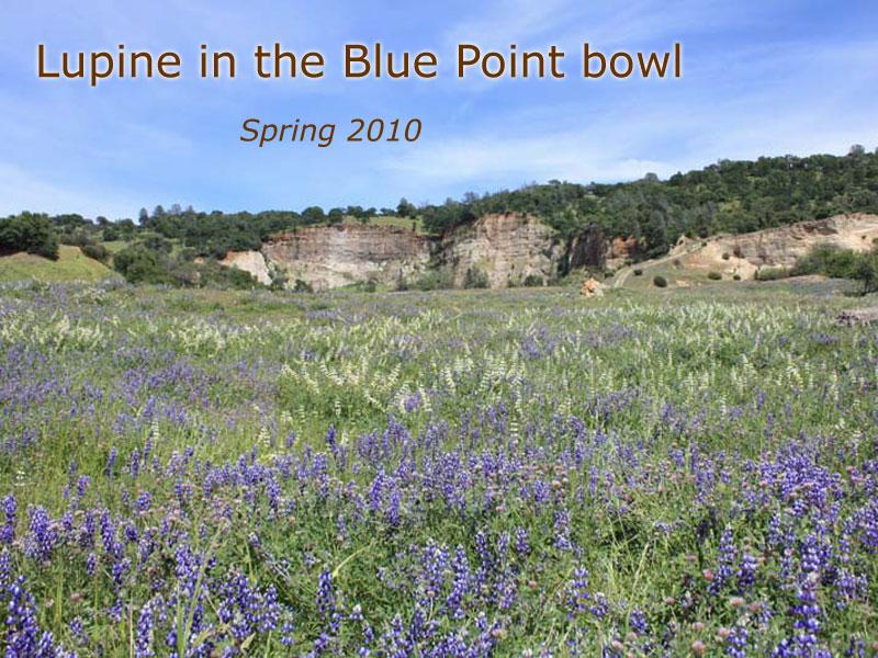 bluepoint (33)