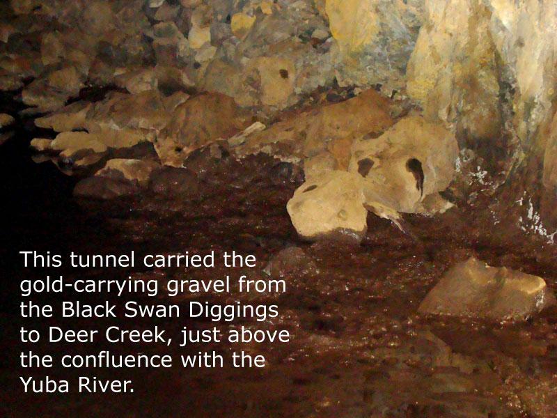 blackswandiggings (7)